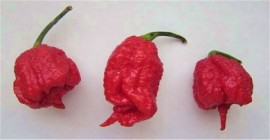 1 Ounce Dried Carolina Reaper Pods